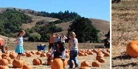Nicasio Pumpkin Patch 2013